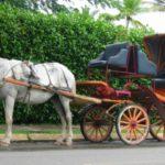 【カーコラム】車のボディタイプの由来とは!初心者でも覚えやすい車の種類!